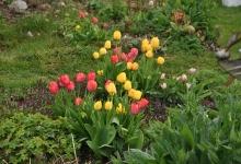 Frühling im Heil Kunst Garten_1